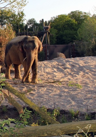 aaallwetterzoo-munster-elefanten-park