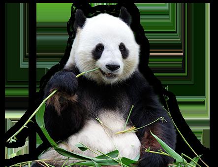 College panda essay rating college confidential