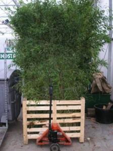 BambusBoxweb