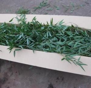 bambuskarton