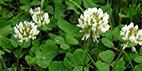 Pflanzenlisten