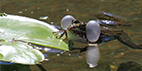 Wasserpflanzen