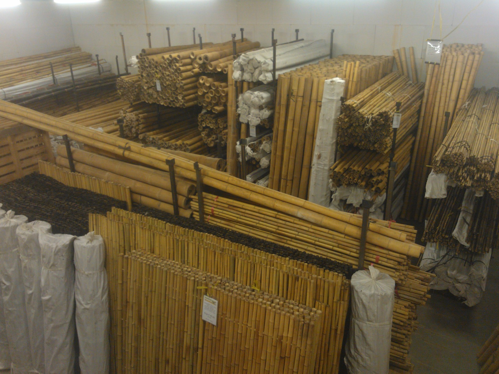 bambusrohre | pflanzenhandel und zoo-gartenbau winkendick